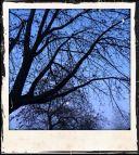 Moon through branches